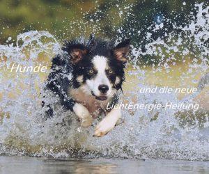 hunde-lichtenergieheilung- pixabay