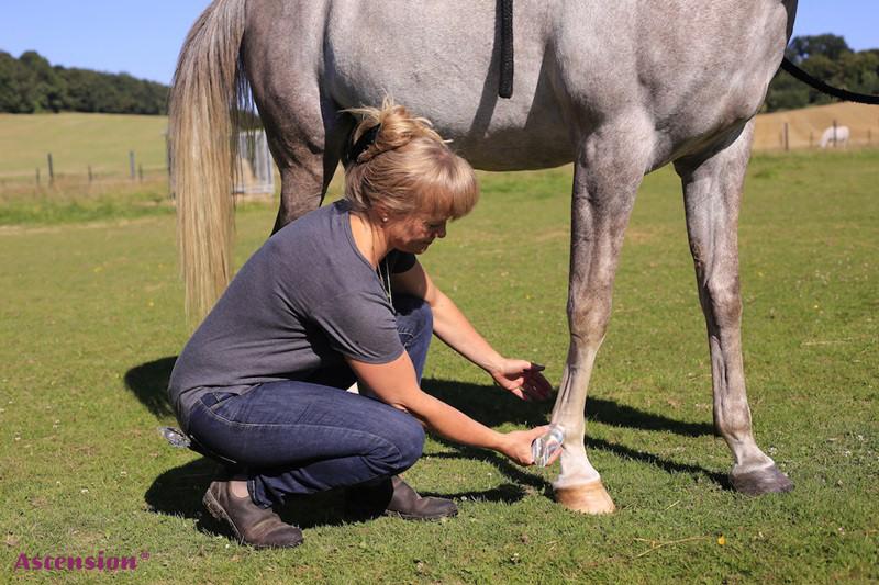 Pferde - LIchtEnergiearbeit