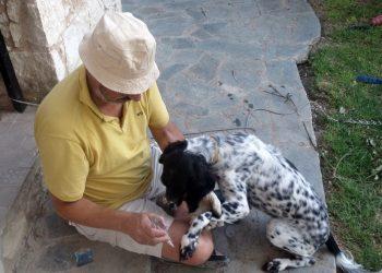 LichtEnergiearbeit beim Hund mit der Flamme, dem Erste-Hilfe Werkzeug