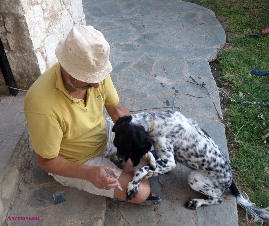 Hunde - LichtEnergiearbeit