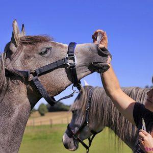 Ascension LichtEnergiearbeit bei Pferden mit der Voice