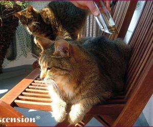 Ascension - Tiere - Katzen - Calming XL -rahmen III