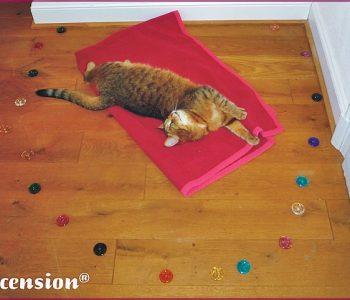 Katzen -regenerieren und entspannen im Heilkreis von Ascension aus allen 27 Energierädern