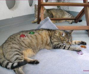LichtEnergiearbeit bei Katzen mit den Energierädern von Ascension