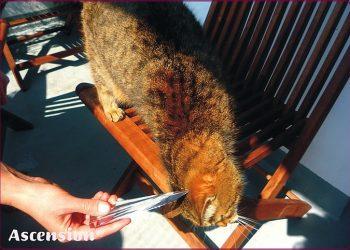 Ascension - Tiere - Katzen - Flamme -rahmen IV