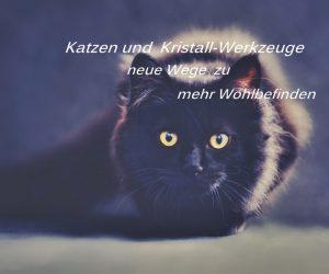 Katzen-lichtkristall-werkzeuge - cat-pixabay 694730