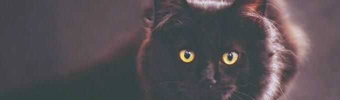 Katzen und LichtEnergie-Arbiet