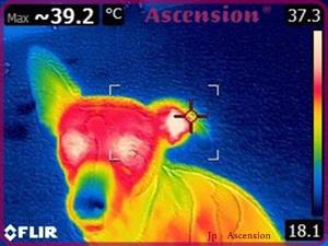 Wärmebildkameraaufnahme nach einer LichtEnergie-Sitzung mit den LichtKRistall-Werkzeugen