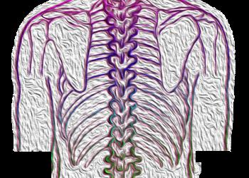 Ruecken - WIrbelsäule- spine-4052599